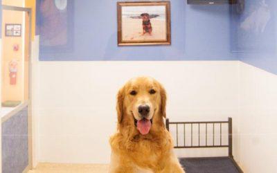 Happy-Pup-138-1024x681