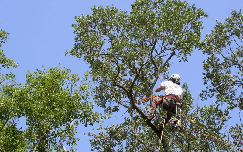 tree-service-professional-climber-1920w